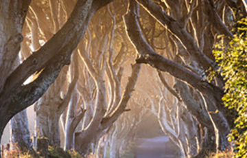 Dark Hedges 500x500