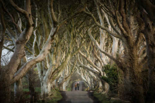 Dark Hedges ICC Belfast